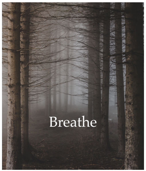 Free Guided Meditation for theBreath